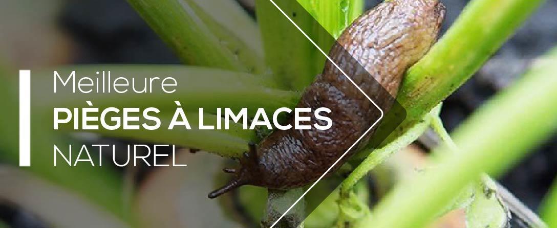 Comparatif et Tests des Meilleurs Anti Limaces bio