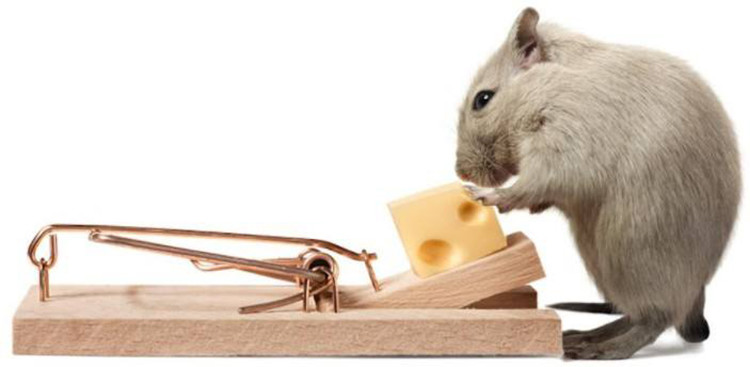 Guide d'achat d'un piège à souris