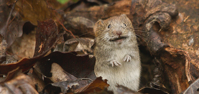 Guide d'achat pour bien acheter un piège à souris