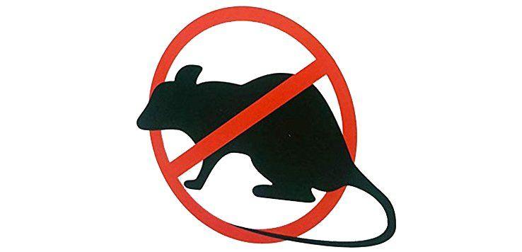 Meilleur Mort au rat - Test et Avis