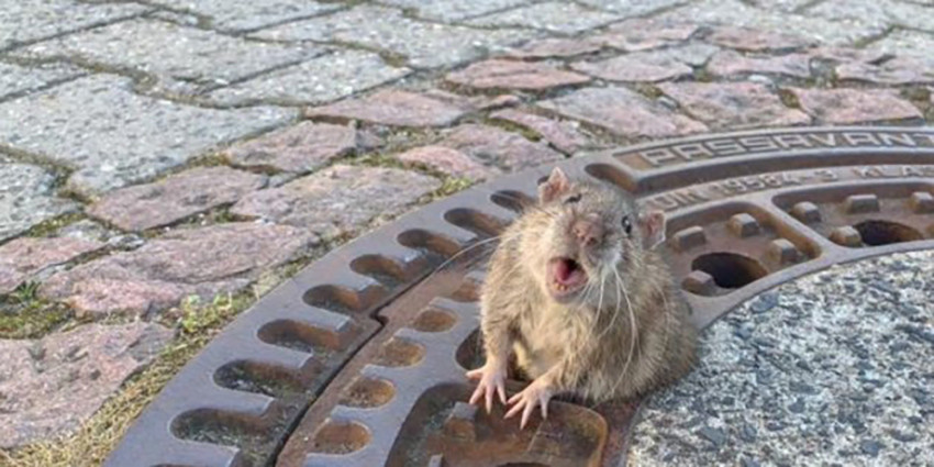Meilleurs Pièges à Rats