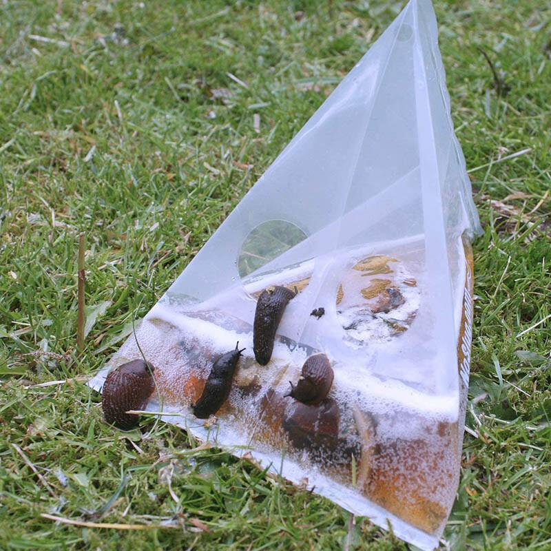 NoSlug Lot DE 40 Pièges à limaces naturel