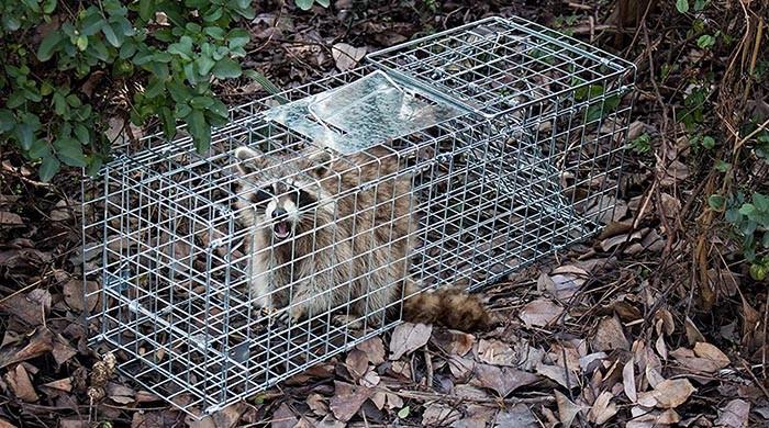 test FOBUY Cage de piège pour Animaux Vivants de qualité Humaine, capturer et lâcher